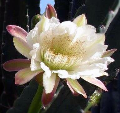 La combinazione di elementi nel concime ideale per le piante succulenti è formata da tre elementi: potassio, azoto e fosforo.