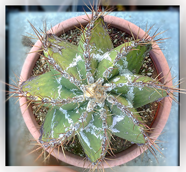 l rinvaso è fondamentale perché la pianta esaurisce le scorte di sali minerali ed elementi nutritivi, presenti nel terriccio. leggi ancora su: Rinvaso piante grasse - Giardino - Piante Grasse http://www.giardinaggio.net/giardino/piante-grasse/rinvaso-piante-grasse.asp#ixzz2rPY7uPNl