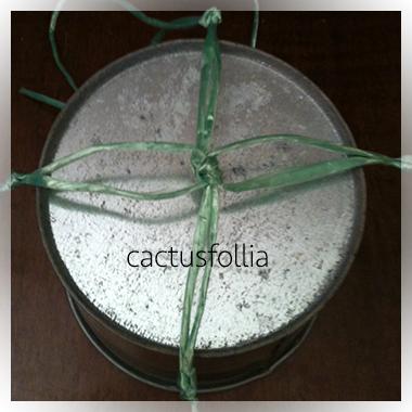 Le piante grasse come le hoya, le crassule ed altre si adattano molto bene alla coltivazione su portavasi appesi. Infatti il loro portamento in genere è ricadente o rampicante.
