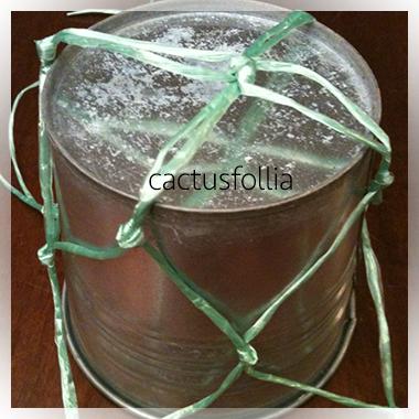 Le piante succulente dal portamento ricadente o rampicante possono adattarsi alla coltivazione con dei vasi appesi.