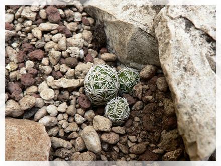 Il mio hobby cactofilo come tutto ebbe inizio - Le piante grasse si possono tenere in casa ...