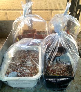 Seminare piante grasse cactusfollia - Le piante grasse si possono tenere in casa ...