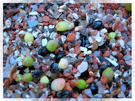 Quando decidiamo di seminare piante grasse, possiamo fare come avremmo fatto per qualsiasi altra pianta, ossia prendere vaso, terra, semi e seminare... avremo buoni risultati. Ma con il passare del tempo vi renderete conto, che c'è bisogno di ottimizzare la resa dei semi, ed in particolare lo spazio occupato dalle semine. Per resa dei semi intendo percentuale di germinazione e cosa più importante percentuale di piante che arrivano a 2-3 anni di vita, e che quindi in questo lasso di tempo non vengono attaccati da funghi, coperti di alghe o mangiati da più o meno simpatici animaletti. Anche lo spazio occupato dipende in qualche modo da questo perchè in una contenitore di 7x7 cm posso seminare e far arrivare a 2 anni di vita 25 piantine, ma se la resa non è ottima avrò ad es 10 piantine, e alla fine dei conti è un peccato, in 10 contenitori (e quando inizierete a seminare vi renderete conto che 10 contenitori di semine sono pochi :D) avrete 100 piantine e non 250, come invece potevate avere nello stesso spazio occupato.