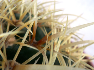 Il rinvaso delle piante succulente è molto semplice ma va fatto con la giusta tecnica.