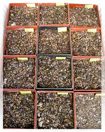 La mia semina di astrophytum cactusfollia for Vasi per semina