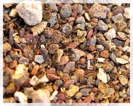 Dopo una settimana la maggior parte dei semi saranno nati ad una temperatura costante di circa 20 °C (Alcuni tipi di semi hanno una germinazione velocissima, 1-2 giorni, altri possono richiedere anche più di un mese). Generalmente per il primo mese (o primi 15 giorni) è consigliabile lasciare chiuso il sacchetto o la pellicola, o lasciare l'acqua nel sottovaso, a meno che non notiate una eccessiva crescita di alghe o di funghi, in quel caso è meglio far areare, ed eventualmente passare alla tecnica del sottovaso, o in casi estremi, far seccare leggermente la terra e rimuovere manualmente le zone contaminate.