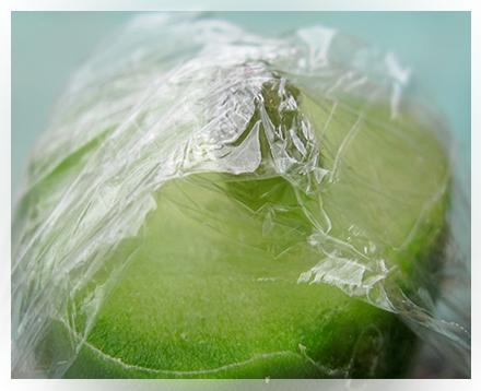 """Il mese di Giugno, in genere, è il periodo ideale per fare qualche innesto. In questo mese infatti, le temperature minime non scendono al di sotto dei 20°C e le temperature medie si mantengono abbastanza alte e costanti.  Personalmente, innesto da diversi anni… anche se tutt'oggi non mi manca di scoprire a volte """"piccoli trucchi"""" provati da altri appassionati nella coltivazione delle piante grasse."""