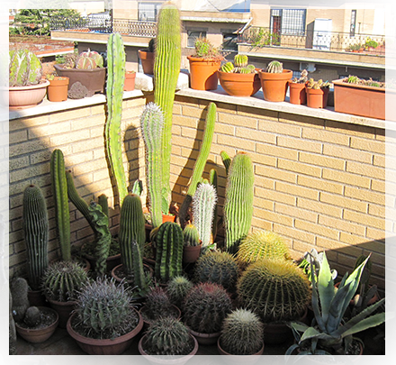 Svernare piante grasse cactusfollia - Costruire giardino roccioso ...