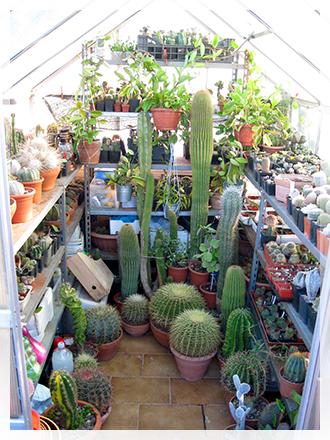 Svernare piante grasse cactusfollia for Serra piante grasse