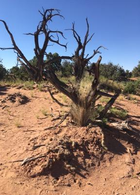 cactus-deserto-americano