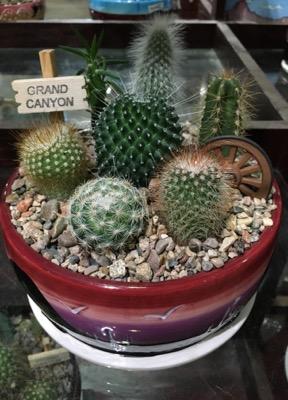 composizione-piante-succulente
