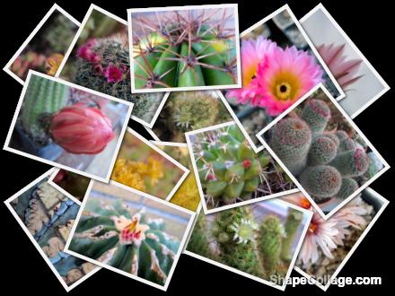 collage-piante-grasse